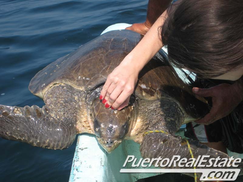 Ridley Turtles 2