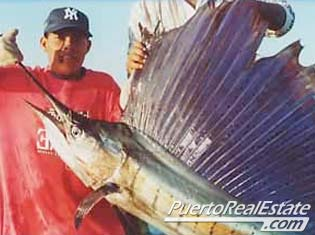 Sailfish sport fishing